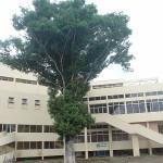 arbre de konia