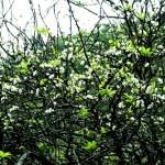 fleursdeprunier