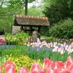jardin de fleurs minh tam