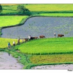 planter du riz