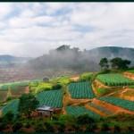 riziereenterrasse