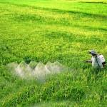 soigner du riz